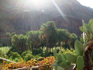 Gran Canaria Pflanzen